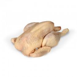 Poule brune